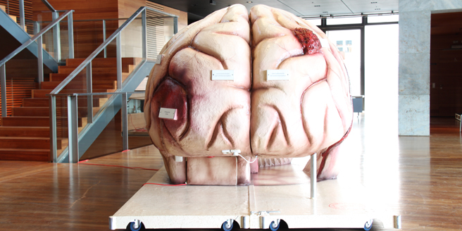 The walk-in brain model